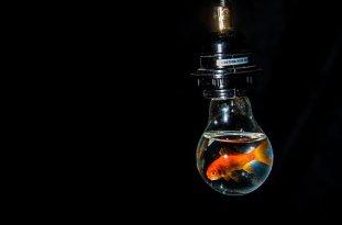 bulb-3144329__340